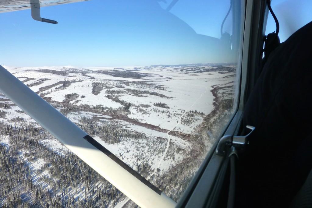 Der Iditarod-Trail führt durch die Blueberry Hills