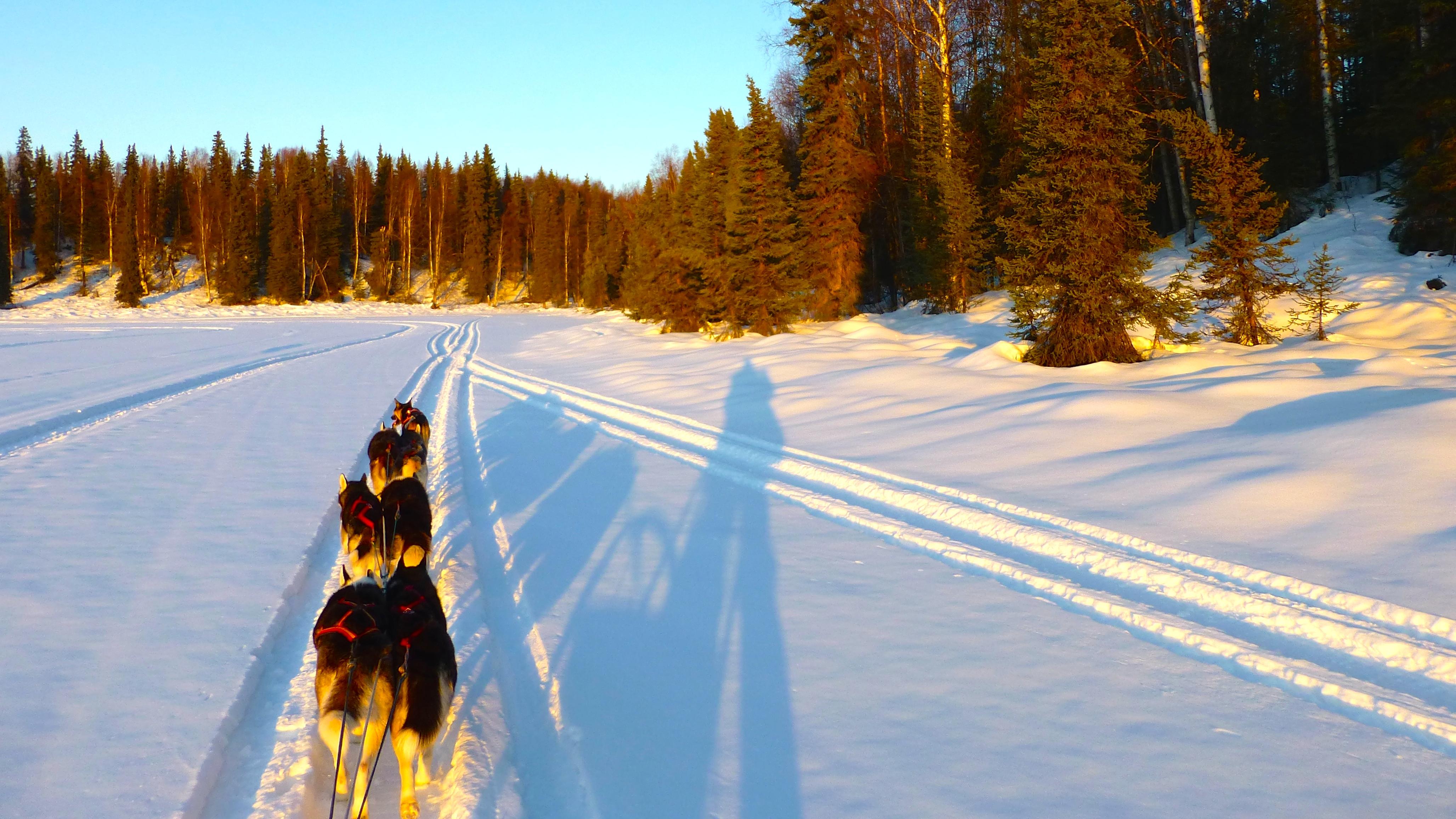 Schlittenhundegespann mit sieben Hunden beim Überqueren eines verschneiten Sees: Sechs Siberian Huskies und davor Raven, Alaskan Husky im Single Lead.